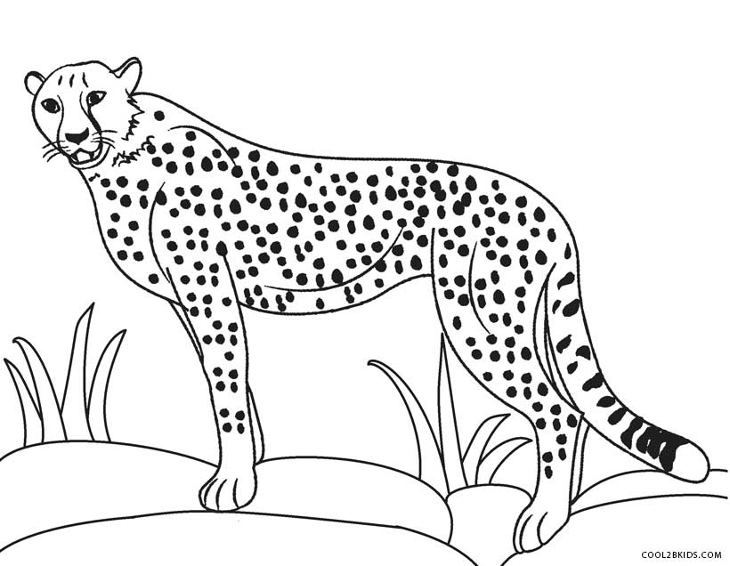820x636 Cheetah Pictures To Color Printable Cheetah Coloring Pages