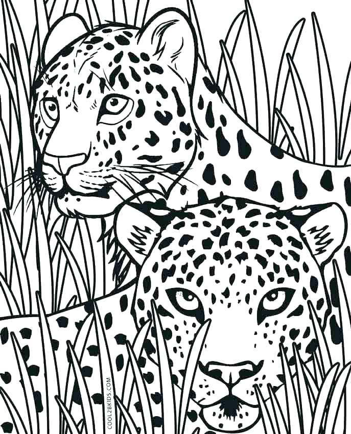 687x850 Coloring Pages Cheetah Back To Post Coloring Book Pages Cheetah