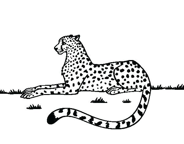 600x470 Coloring Pages Cheetah Coloring Pages Cheetah Coloring Pages