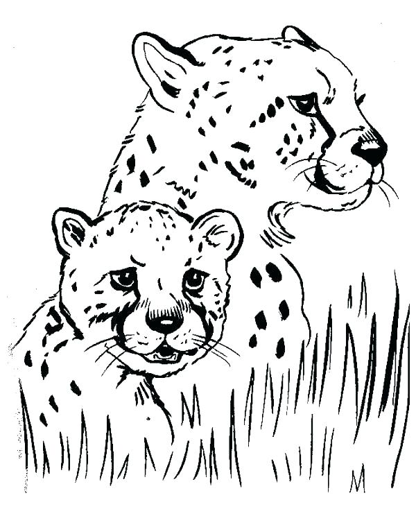 600x734 Coloring Pictures Cheetah Cubs Printable Coloring Cheetah Coloring