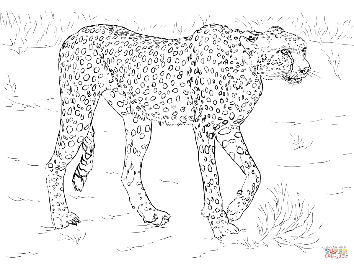 1199x899 Cheetah Coloring Pages Free Coloring Pages Cheetah Color Page