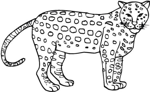 600x370 Awesome Cheetah Coloring Page