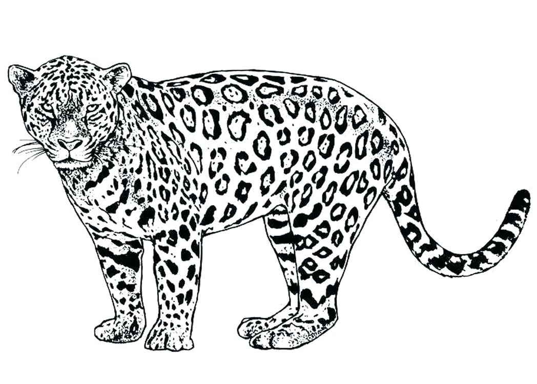 1048x749 Cartoon Cheetah Coloring Pages Not Found A Coloring Pages