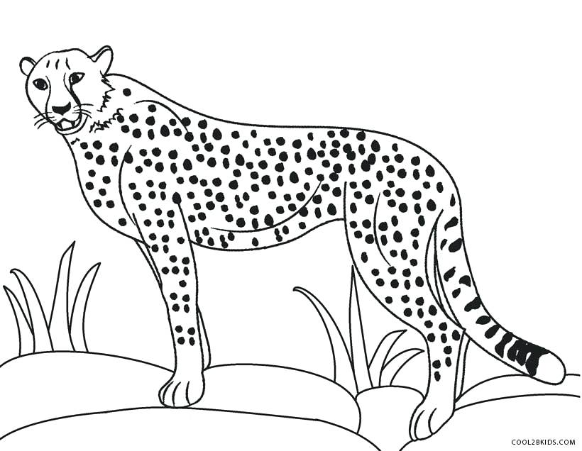 820x636 Cheetah Coloring Pages Cheetah Color Page Cheetah Coloring Pages