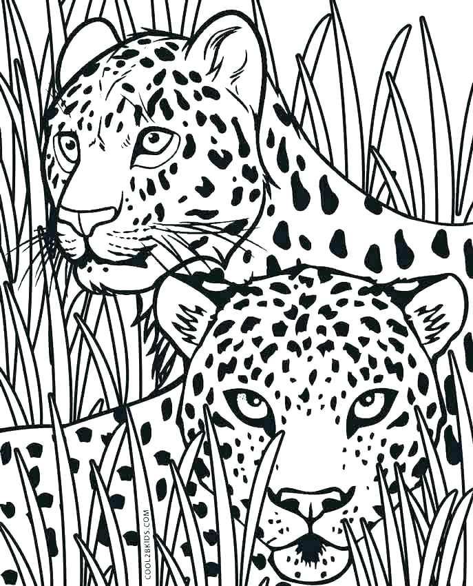 687x850 Cheetah Coloring Pages Cheetah Coloring Page Cute Cheetah Coloring