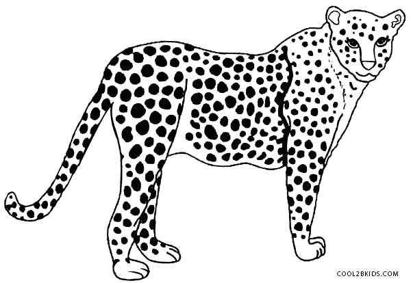 600x414 Cheetah Coloring Pages Cheetah Coloring Pages Online Realistic