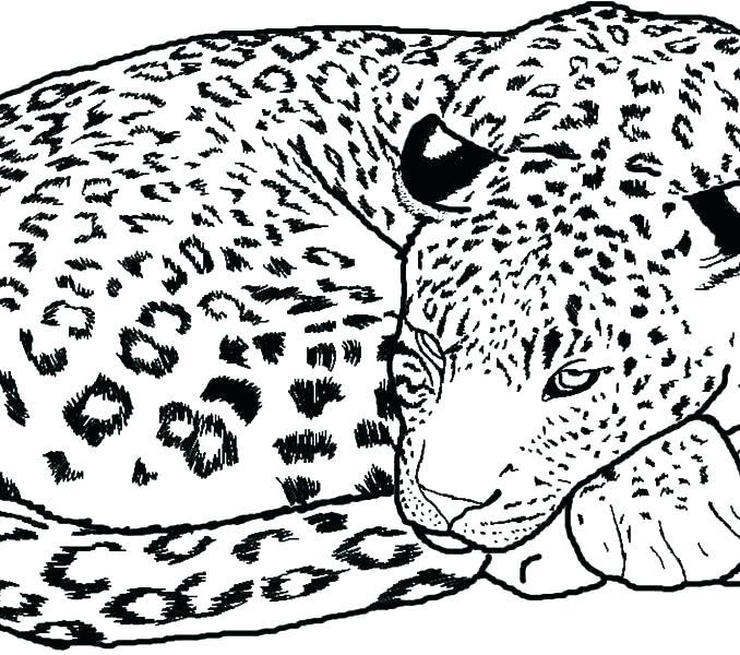 678x600 Cheetah Coloring Pages Cheetahs Color Coloring Pages Of Cheetahs