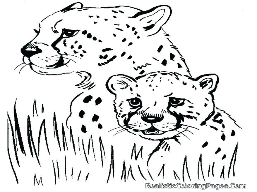 878x659 Cheetah Coloring Pages Online Printable Coloring Cheetah Coloring