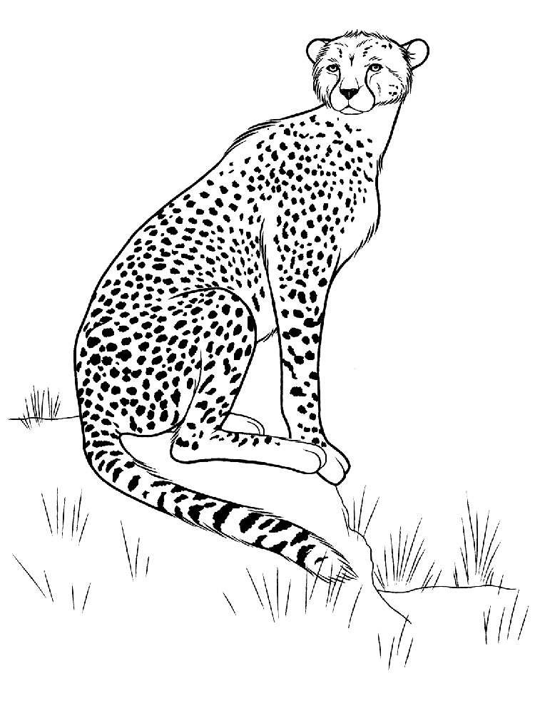 750x1000 Cheetah Coloring Pages Download And Print Cheetah Coloring Pages