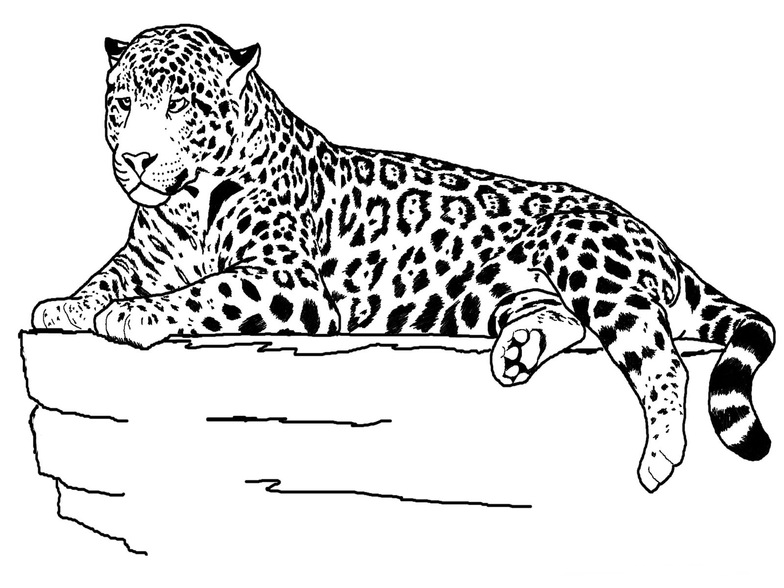 1600x1200 Elegant Free Printable Cheetah Coloring Pages For Kids Free