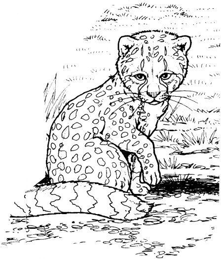 448x525 Cheetah Cub Coloring Page Fun For The Kiddos Baby