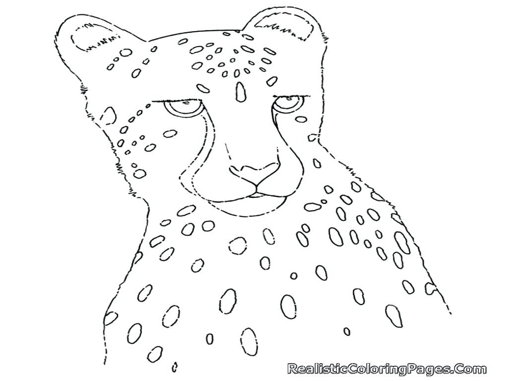 1024x768 Coloring Pages Cheetah Coloring Page Pages For Adults Only