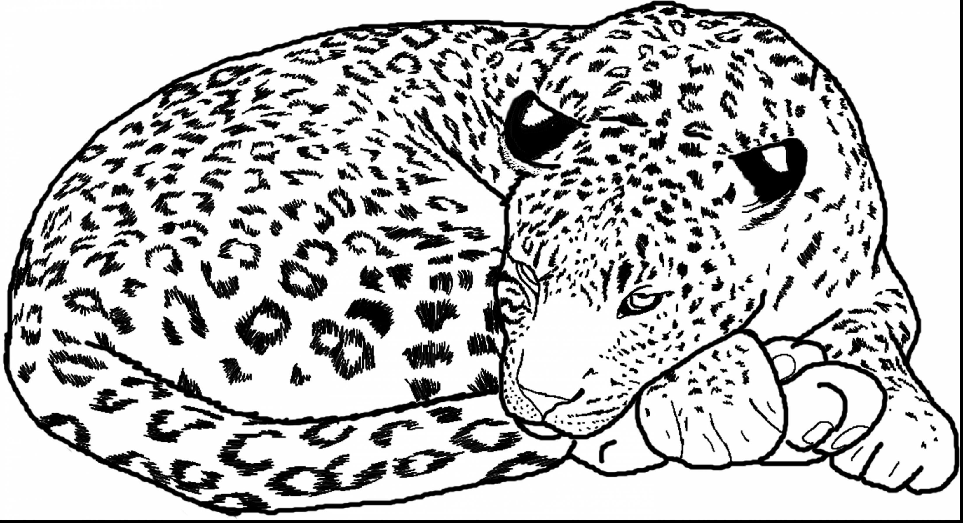 Cheetah Coloring Pages For Adults At Getdrawings Free Download