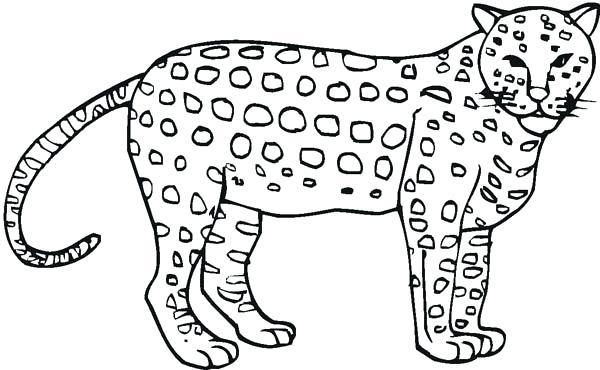 600x370 Cheetah Coloring Awesome Cheetah Coloring Page Cheetah Coloring
