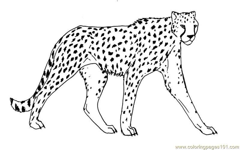800x502 Cheetah Coloring Page