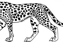 220x150 Cheetah Coloring Pages