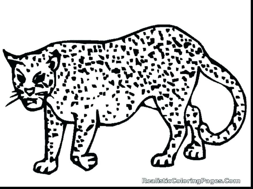 878x658 Coloring Pages Cheetah Coloring Pages Cheetah Coloring Page