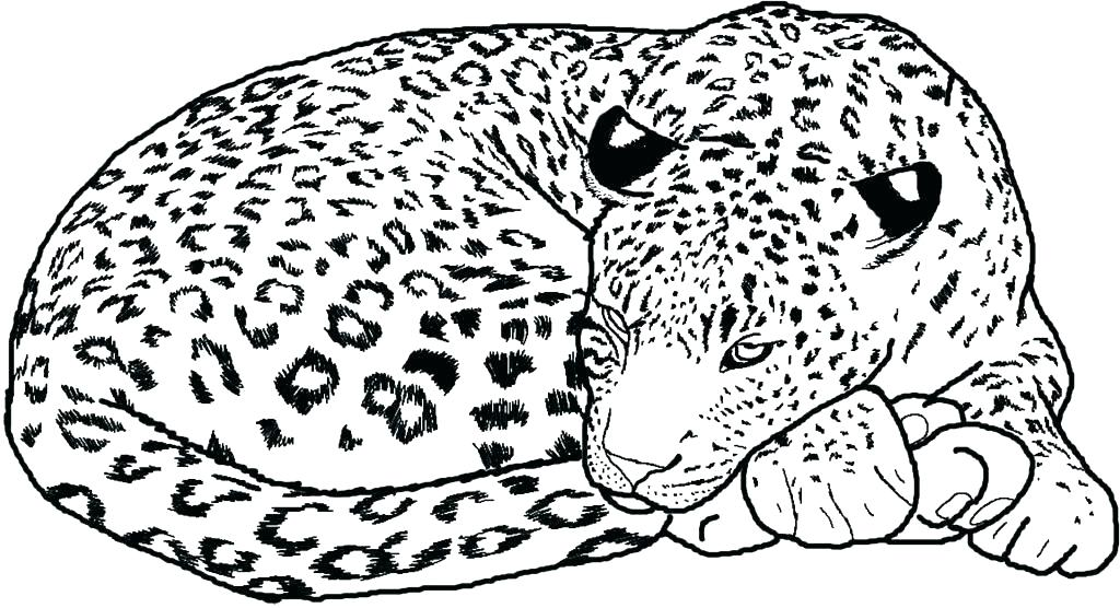 1024x556 Coloring Pages Of Cheetahs Coloring Pages Cheetah Coloring Pages