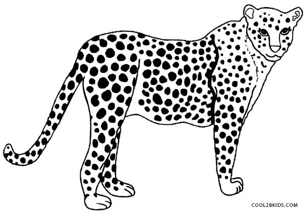 600x414 Printable Cheetah Coloring Pages For Kids