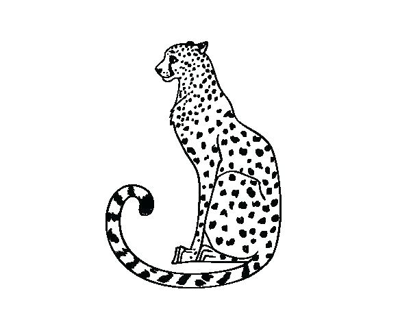 600x470 Cheetah Coloring Pages To Print