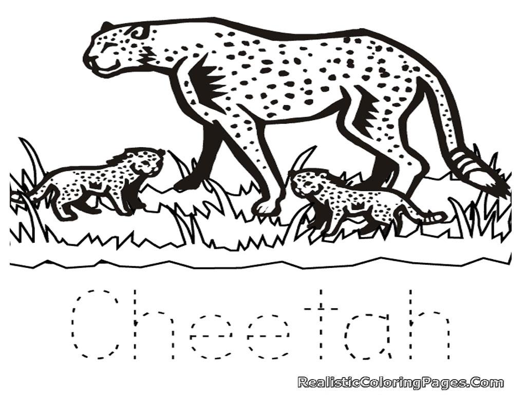 1024x768 Beautiful Cheetah Coloring Pages Free Printable Cheetah Coloring