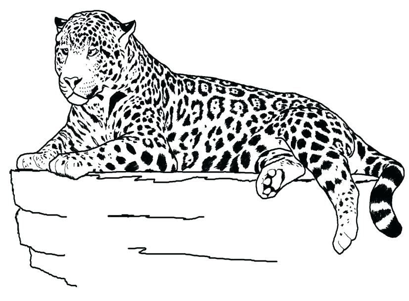 827x609 Cheetah Coloring Page Cheetah Coloring Pages Printable The Ideal