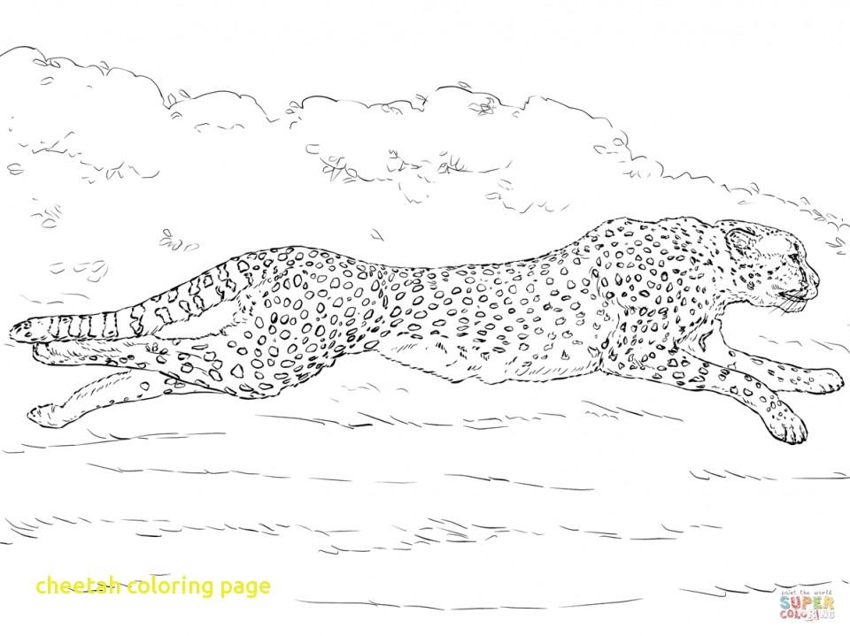 960x719 Cheetah Coloring Page With Drawn Cheetah Coloring Page Pencil