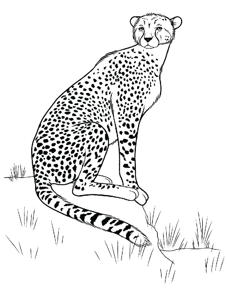 750x1000 Cheetah Coloring Pages Baby Cheetah Coloring Sheets Cheetah