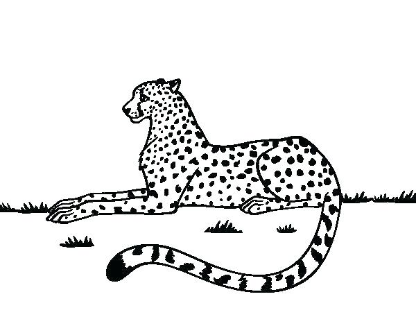 600x470 Cheetah Coloring Pictures