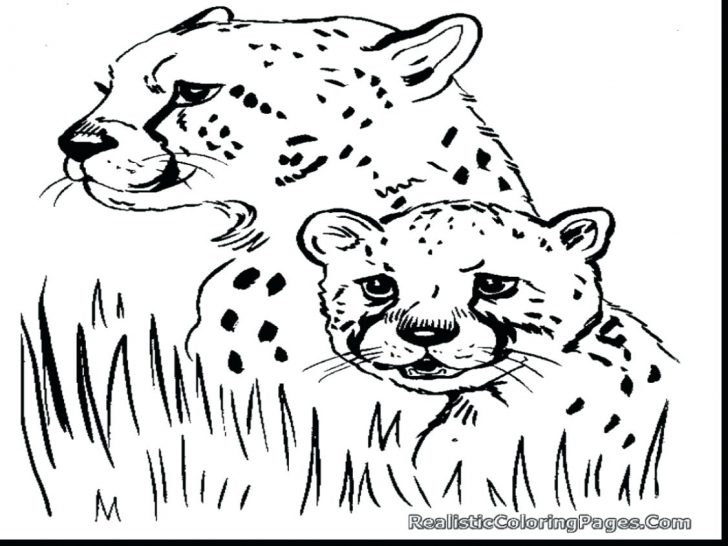 728x546 Cheetah Cubs Coloring Pages Beautiful Printable With And Her