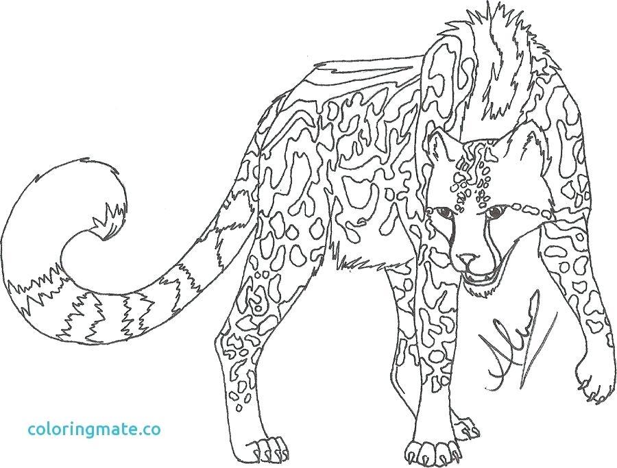 900x683 Cheetahs Color Cheetah Coloring Page Unique Cheetah Coloring Pages