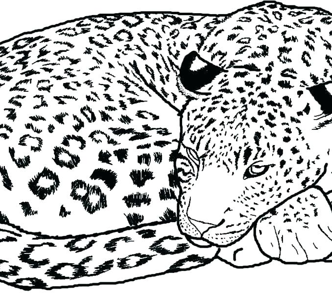 678x600 Coloring Pages Cheetah Coloring Pages Page With Surprising Leopard