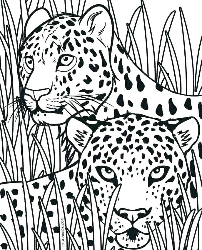 687x850 Coloring Pages Cheetah Wild Coloring Page Cheetah Cubs My Free