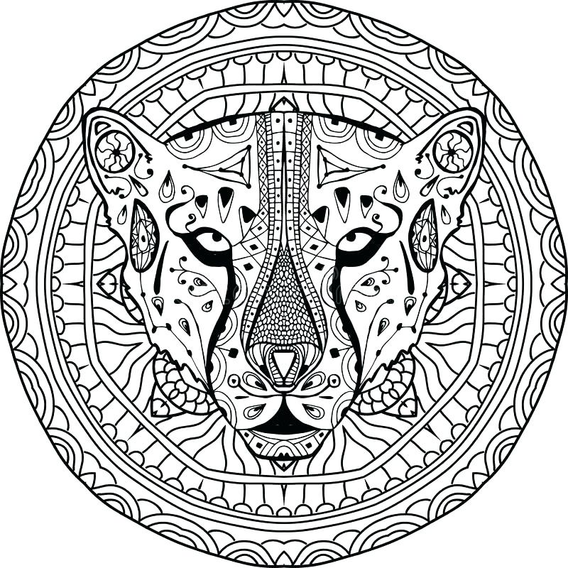 800x800 Pictures Of Cheetah Coloring Pages Cheetah Coloring Pages