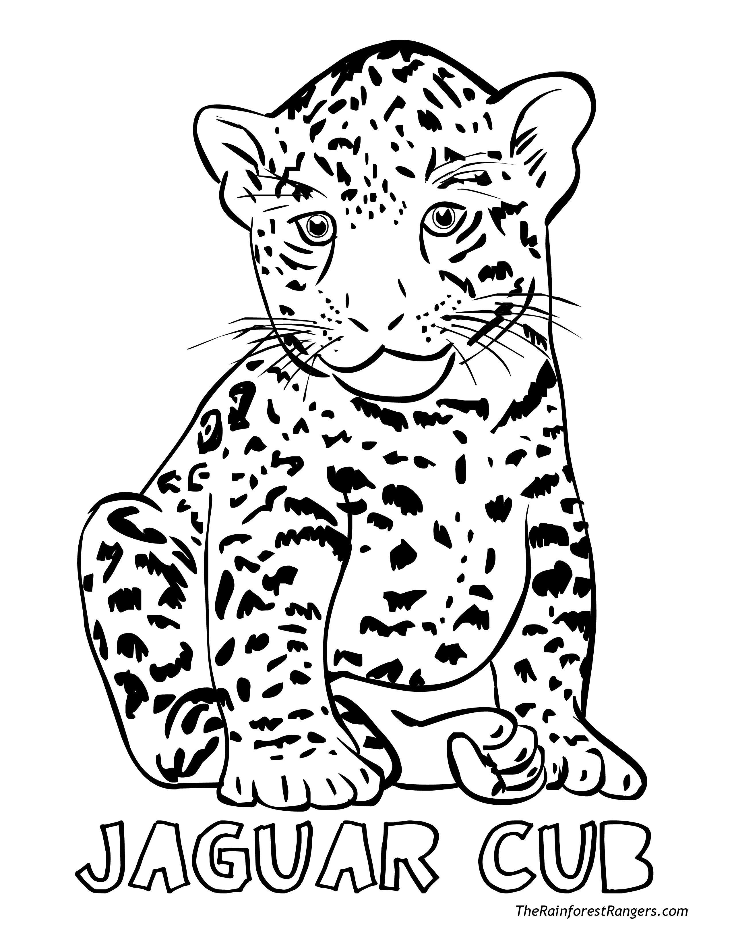 2550x3300 Amazing Cheetah Pictures To Color Printable For Beatiful Beautiful