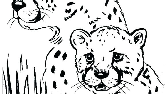 585x329 Printable Baby Cheetah Coloring Pages Page Print Sheets For Kids