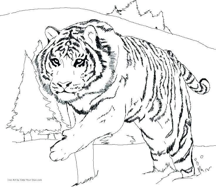 736x639 Snow Leopard Coloring Pages Baby Leopard Colouring Snow For Kids