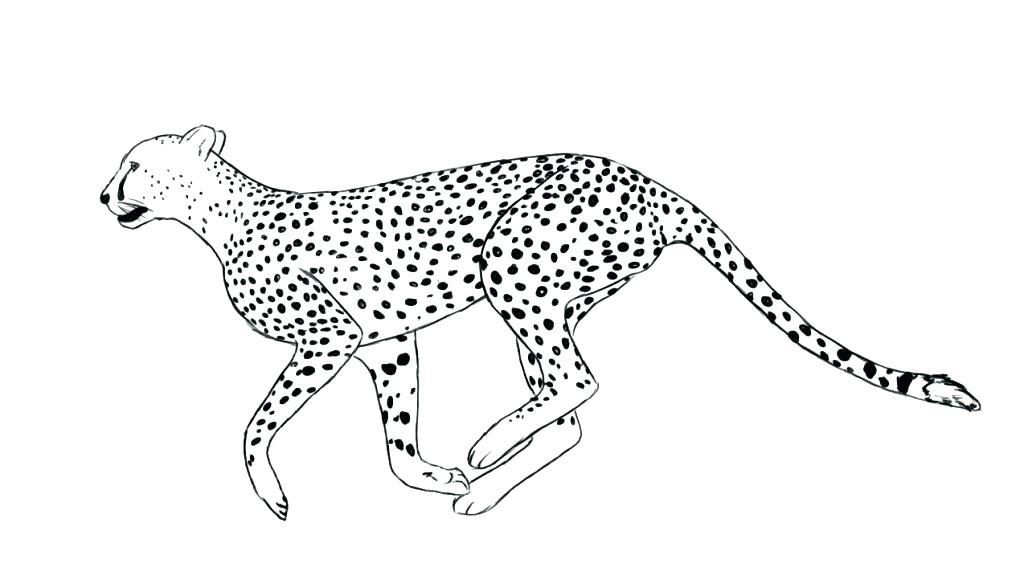 1024x563 Cheetah Cub Coloring Pages