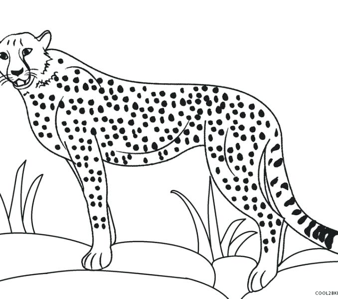 678x600 Cheetah Coloring Pages Little Baby Cheetah Coloring Page Cute Baby