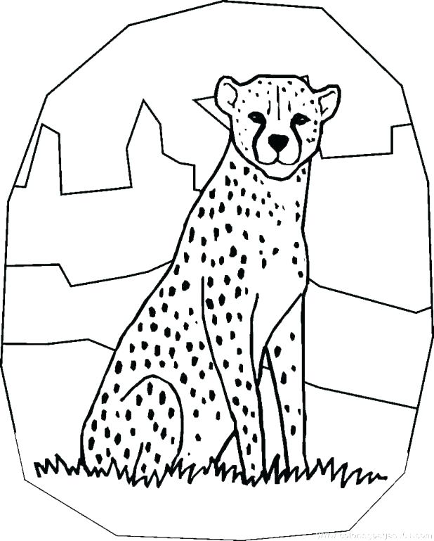 618x769 Coloring Pages Of Cheetahs Coloring Pages Cheetah Coloring Pages
