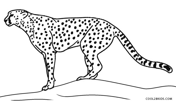 600x352 Printable Cheetah Coloring Pages For Kids