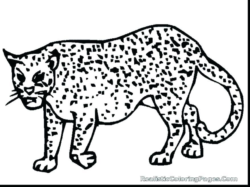 878x658 Cheetah Coloring Pages Cheetah Coloring Pages Printable Page Free