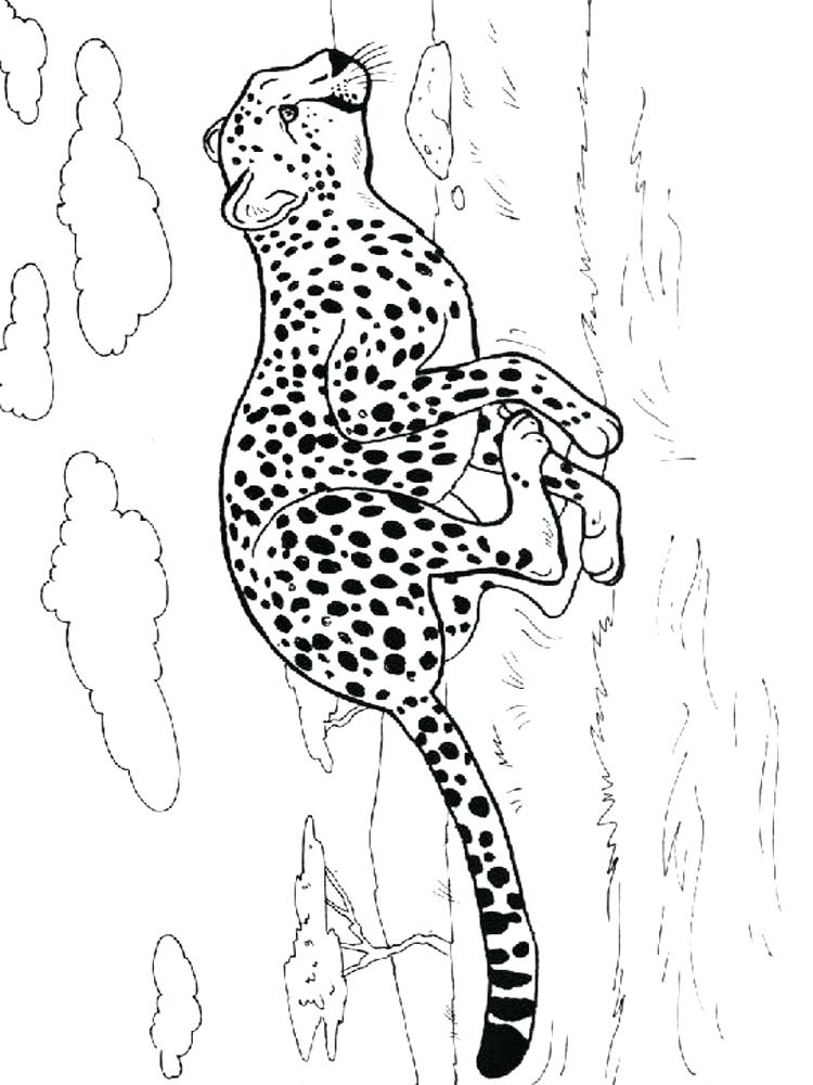 750x1000 Cheetah Coloring Pages Free Coloring Pages Cheetah Running