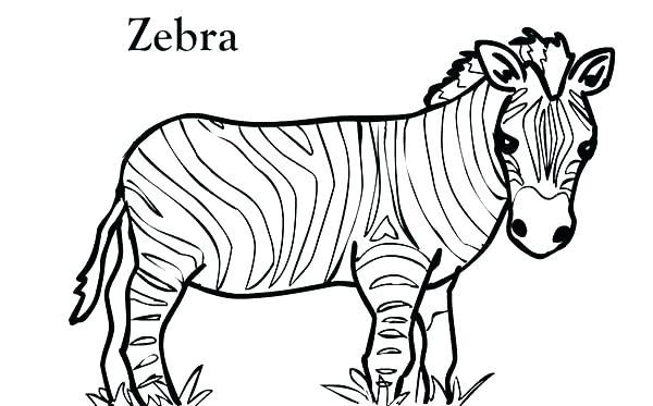 600x373 Cheetah Running Coloring Pages Kids Coloring Cheetah Print