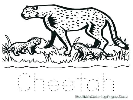 440x330 Cheetah Coloring Page Coloring Pages Cheetahs Coloring Pages