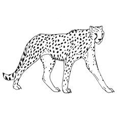 230x230 Cheetah Coloring Pages Cheetah Coloring Page Kyle's Animal