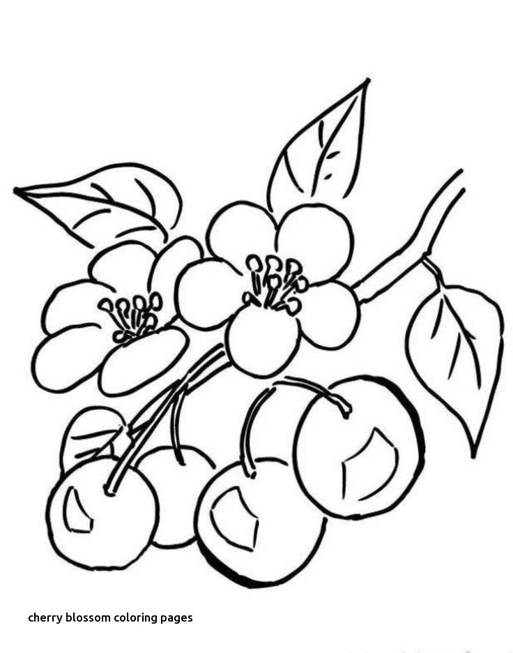 736x936 Cherry Blossom Coloring Pages