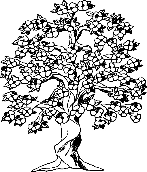 510x597 Cherry Blossom Coloring Pages Elegant Cherry Blossom Tree Clip Art