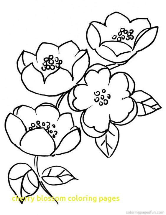563x730 Cherry Blossom Coloring Pages With Cherry Blossom Coloring Pages