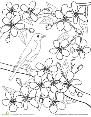 301x389 Color The Flowers Cherry Blossoms Worksheet